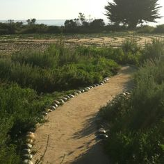The labyrinth on the bluffs at UCSB.