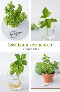 Simple irrigation system for herbs + basil propagate yourself! - New herb pots with practical irrigation system and how to easily grow basil yourself! New herb pots - Garden Care, Container Flowers, Container Plants, Herb Pots, Garden Pots, Container Gardening Vegetables, Diy Garden Projects, Medicinal Herbs, Gardening For Beginners