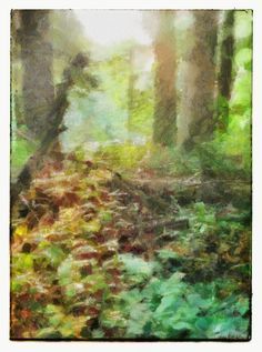 Sunrise in the forest Best Iphone, Iphone Photography, Your Image, Photographers, Sunrise, Eye, Board, Painting