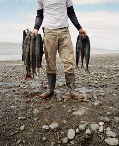 The wild salmon run in Bristol Bay is the largest in the world. Image: Corey Arn… – Photography, Landscape photography, Photography tips Fishermans Friend, A Well Traveled Woman, Salmon Run, Man Up, Gone Fishing, Fishing Trips, Norman Rockwell, Belle Photo, The Great Outdoors