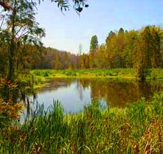 Phinizy Swamp Hiking and Biking Trails