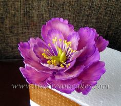 pink and purple open peony