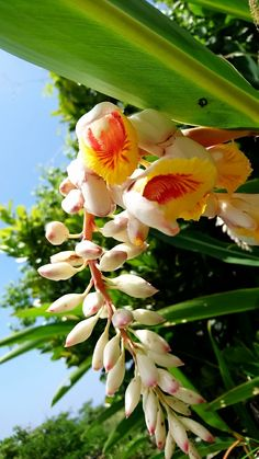 Beautiful Flowers, Lily, Plants, Orchids, Plant, Lilies, Planets