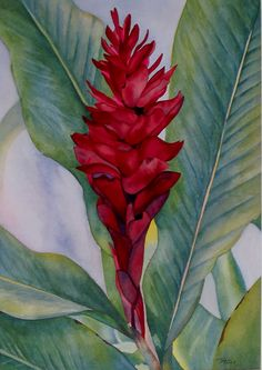 Exotic Flowers, Tropical Flowers, Cactus Flower, Hawaiin Flowers, Lilies Flowers, Flowers Garden, Blue Flowers, Watercolor Flowers, Watercolor Paintings