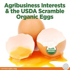 Lobbyists Conspired to Confine Chickens to Factory Farms Consumers Fight Back through Marketplace Activism. #eggs #food #ag #goorganic #organiceggs