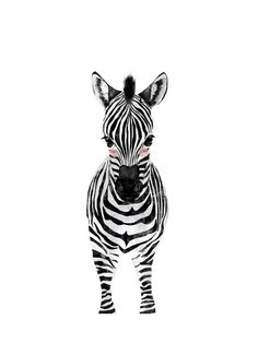 baby animal.zebra Wall Art Prints by Cass Loh | Minted