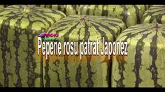 Square Watermelon, Internet Radio, Japan, Painting, Musica, Japanese Dishes, Painting Art, Paintings, Painted Canvas