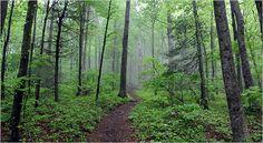 Bucket List - Experience an Appalachian Trail morning.