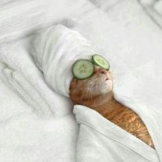 Decollete Spa treatment- who says that the spa lifestyle is just for my human?