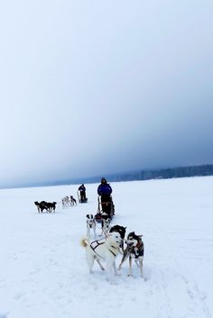 Hondensledetocht in betoverend Lapland Travel Pictures, Husky, Travel Photos, Husky Dog