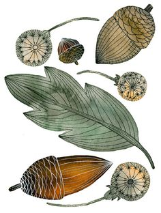 River Luna. leaf acorn
