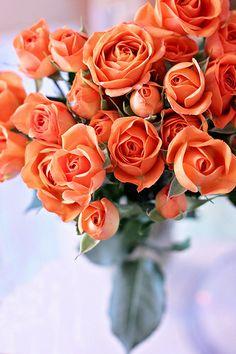'Birthday Roses' iPhone Case by AbigailJoy Love Rose, Love Flowers, My Flower, Flowers In Hair, Wedding Flowers, Exotic Flowers, Birthday Roses, Birthday Bouquet, Happy Birthday