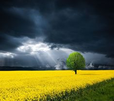 Ceni (@peac4love) / Twitter Landscape Photos, Landscape Art, Landscape Paintings, All Nature, Amazing Nature, Dark Skies, Sky And Clouds, Pics Art, Watercolor Landscape