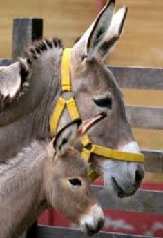 Donkey with Foal - certainly a family likeness there !!