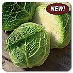 Organic Produsa F1 Hybrid Cabbage
