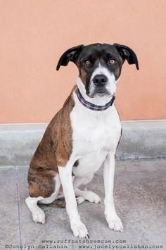 Labrottie dog for Adoption in Salt Lake City, UT. ADN