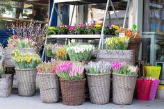 wiener märkte Vienna, Awesome, Plants, Plant, Planets