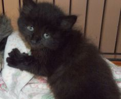 16 Kitties Ideas Cats Adoption Kitty
