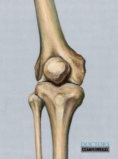 Anatomy Tattoo, Leg Anatomy, Anatomy Drawing, Anatomy Art, Human Anatomy, Skeleton Muscles, Skeleton Drawings, Anatomy For Artists, Medical Art