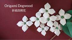 - Origami Dogwood Flower/ Paper Flower 折纸四照花 Origami Ball, Origami Rose, Diy Origami, Paper Origami Flowers, Origami Simple, Origami Flowers Tutorial, Fabric Origami, Origami Instructions, Origami Paper