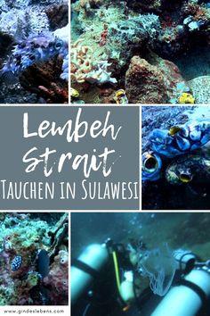 Tauchen in der Lembeh Strait Sulawesi Indonesien. Das Lembeh Resort ist ein traumhafter Ort und bietet ein unglaubliches Tauchgebiet, die berühmte Lembeh Strait (Lembeh Straße). Ein einzigartiger Tauchplatz und Muck-Diving-Mekka mit einer enorm hohen Dichte und Vielfalt seltener und ungewöhnlicher Meereslebewesen. www.gindeslebens.com #Sulawesi #Indonesien #TauchenSulawesi #LembehResort #LembehStrait #CrittersLembeh Travel Companies, Koh Tao, Snorkeling, Southeast Asia, Places To See, Travel Destinations, Cool Designs, How To Apply, Island