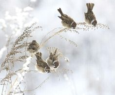 Little Feathered Friends ~