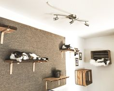 Cat Wall Furniture, Cat Room, Hand Sketch, Small Space Living, Cat Life, Wall Lights, Ceiling Lights, I Love Cats, Free Food