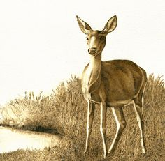"""Deer At Dawn"" is totally burned on paper, matted in a 12x12 frame."