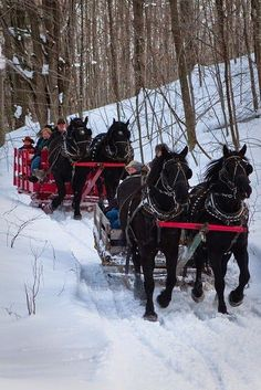 Our neighbors, the Slusher's, had pulling ponies. Around Christmas, they took me for a jingle bell ride in a sledge when I was 9 or 10. One of my favorite holiday memories.