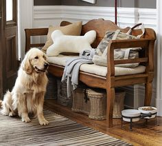 Ready for an afternoon walk! #potterybarn #pbpet