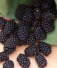Triple Crown Blackberry Plants, How to Grow Fruit Plants Blackberry Plants, Blackberry Bush, Blackberry Cobbler, Fruit Plants, Fruit Trees, Fruit Bushes, Thornless Blackberries, Growing Blackberries, Growing Mushrooms