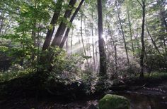 Savage River State Forest Adventures | Lake Pointe Inn | Deep Creek Lake, MD