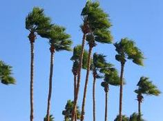 """The Great """"Too Windy to Play"""" Hoax (And How It's Costing You Points if Not Games & Matches) - Pickleball Strategies, Tips and Tricks; Pickleball Lessons, Coaching, Clinics and Bootcamps English Idioms, English Lessons, Learn English, Windy Weather, Weather And Climate, Le Moral, Sante Plus, Idioms And Proverbs, Reading Practice"""