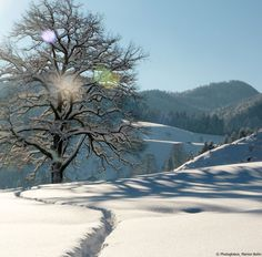© Photoglobus, Marion Bohn, Eiche im Winter
