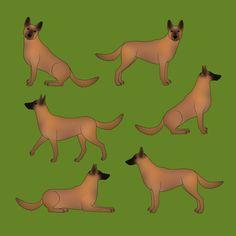 Ein belgischer Schäferhund