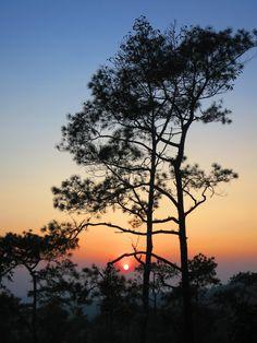 Phu Rue, Loei, Thailand #tree #sunset