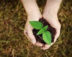 Image result for earth soil organic
