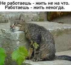 Картинки всякие, разные, из этих... ваших... Cute Cats, Funny Cats, Funny Animals, Cute Animals, Cute Animal Pictures, Funny Pictures, Walk Around The World, Funny Quotes, Funny Memes