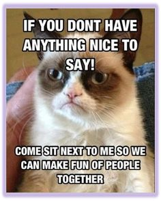 Funny pictures about Meet Grumpy Cat. Oh, and cool pics about Meet Grumpy Cat. Also, Meet Grumpy Cat. Grumpy Cat Quotes, Meme Grumpy Cat, Gato Grumpy, Grumpy Kitty, Angry Cat Memes, Angry Cat No, Funny Shit, Funny Cats, Funny Animals