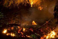 olio di palma deforestazione greenpeace