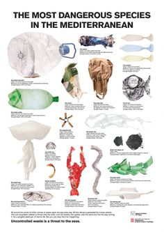 The Most Dangerous Species in the Mediterranean #dangerousspecies #infographic