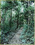 Sage Mountain, Tortola - hiking guide