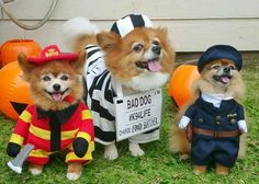 Firefighter Lilikoi, Jail Dog Buster and Police Dog Rella Costumes for Halloween Pet Parade Pet Halloween Costumes, Halloween Fashion, Pet Costumes, Dog Halloween, Halloween 2018, Big House Cats, Halloween Outside, Serval Cats, Pet Parade