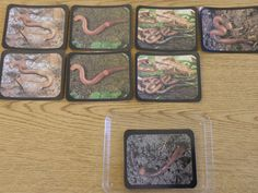 earthworm matching pictures Earthworms, Pictures, Frame, Home Decor, Photos, Picture Frame, Decoration Home, Room Decor, Frames