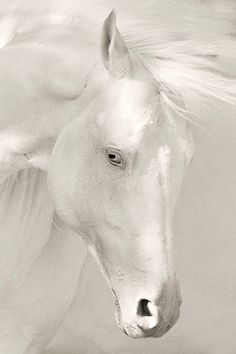 Spirit Animal - The wind of heaven is that which blows between a horse's ears.  ~Arabian Proverb -