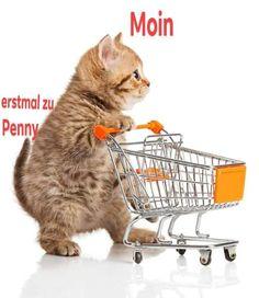Die 77 Besten Bilder Von Katzen Katzen Lustige Katzen Und