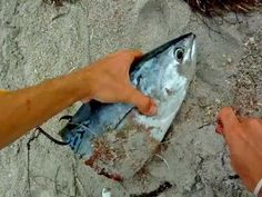 Shark Fishing Tips - How to Rig Big Baits