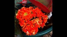Flores carnívoras, cactus e variadas.....