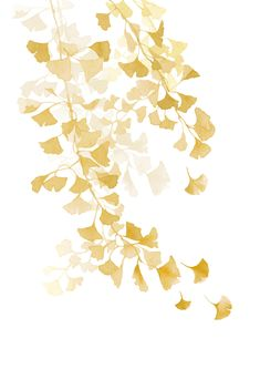 sunny ginkgo biloba - watercolor illustration by Aga Szafranska
