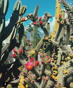 Paradise is this cacti garden